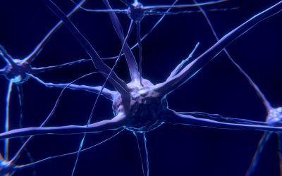 Un nuevo tratamiento con Gel permite regenerar neuronas tras un Ictus