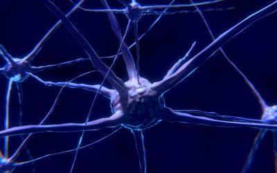 Recuperación tras un ictus (astrocitos y pericitos)